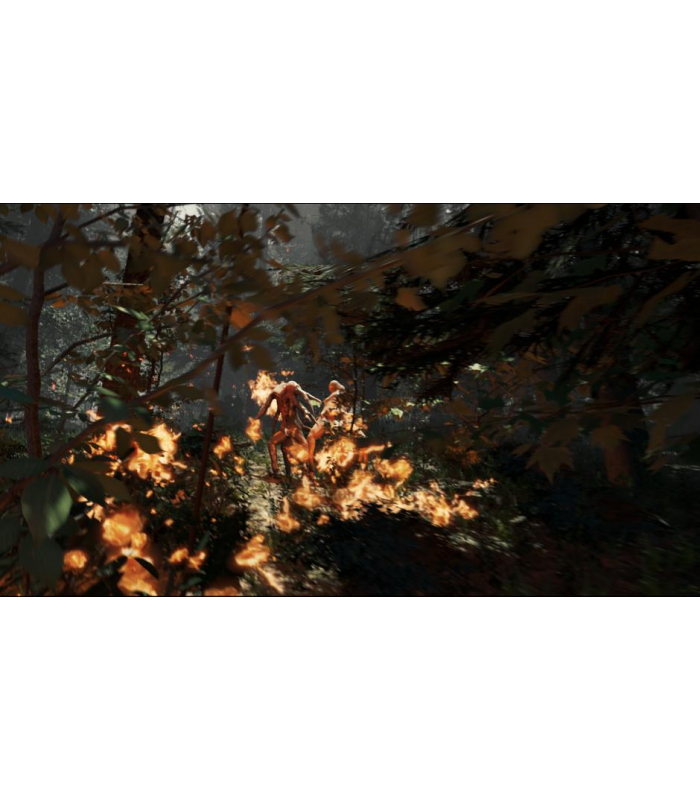 THE FOREST - 2